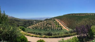 Tokara - visit amazing winery in Stellenbosch Mountians, SA