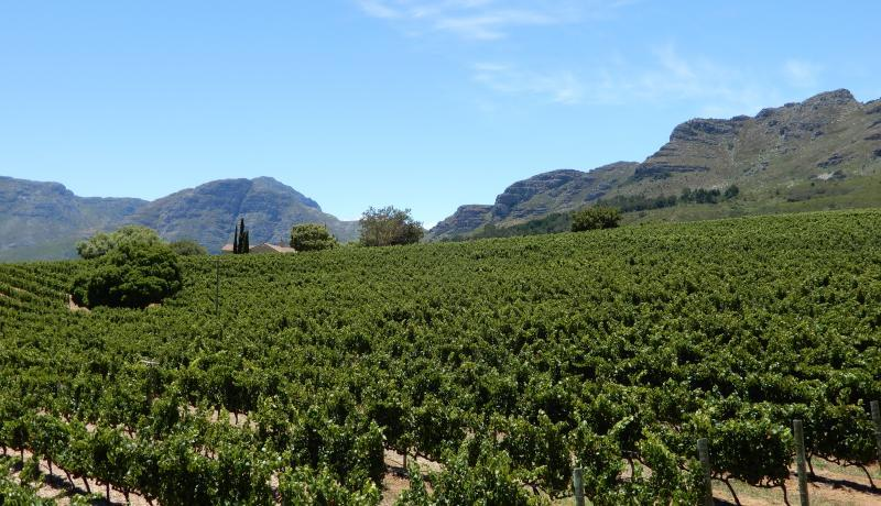 Zwiedzanie winnic