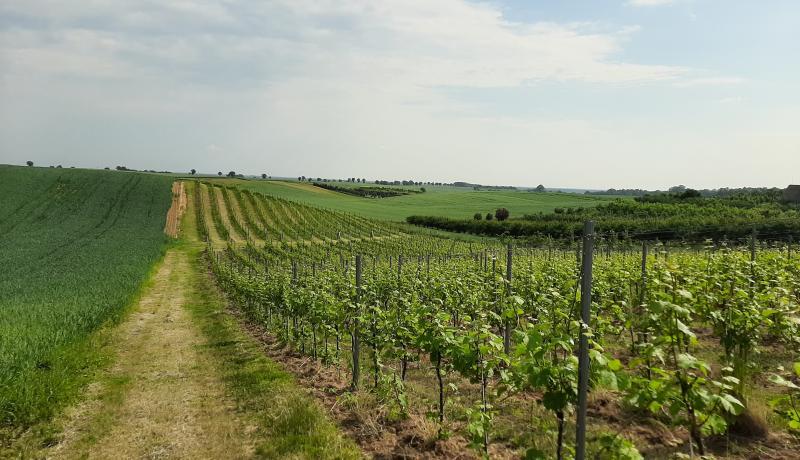 Zaczęło się od tego, że piliśmy wino ... - pełen ciekawostek wywiad z Nestorem Kościańskim, właścicielem i winiarzem z Winnicy Moderna