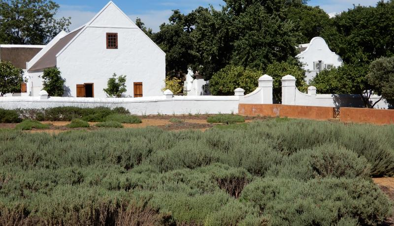 Babylonstoren - beauty and complexity of a wine farm