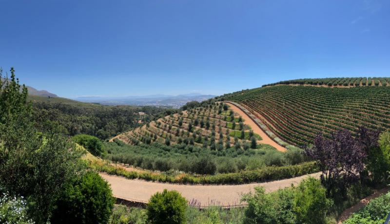 Tokara - visit amazing winery in Stellenbosch Mountians, SA