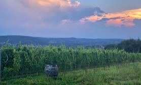 Zwiedzamy polskie winnice cz. 2 - okolice Krakowa