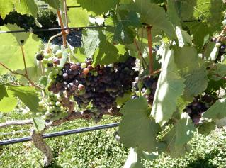 Wine tasting -  South America vol. 1