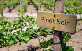 Sześć Odcieni Pinot Noir