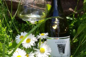 White wines - weekly recommendations - part 1
